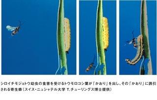 植物の会話.jpg