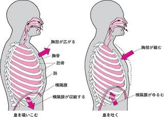 胸式呼吸.jpg